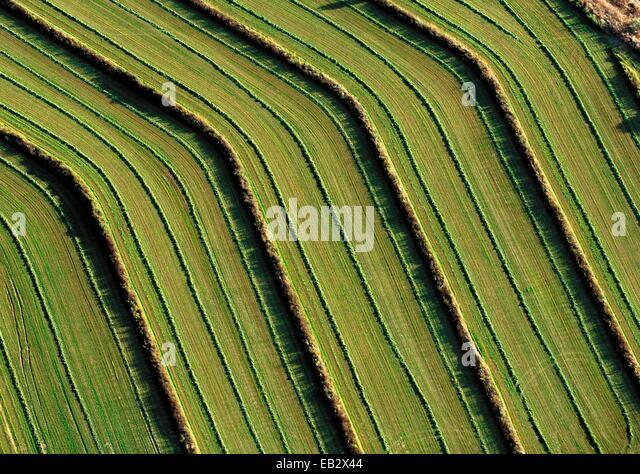 Gepflügten Felder. Stockbild