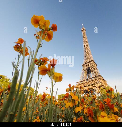 Eiffelturm gesehen durch Blumen, Paris, Frankreich Stockbild