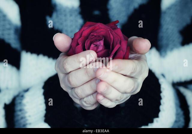 Nahaufnahme einer Frau, die in ihren Händen eine Holding-rote rose Stockbild