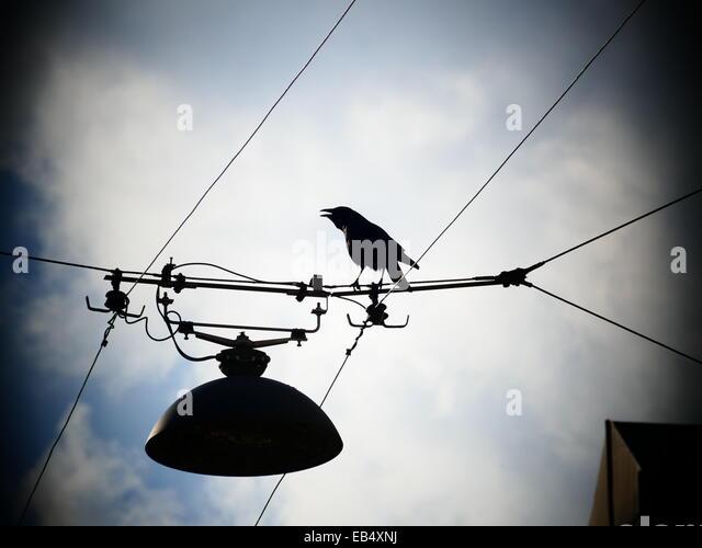 Crow Raven Black Bird fliegen weg von Elektrokabel Linie Stockbild