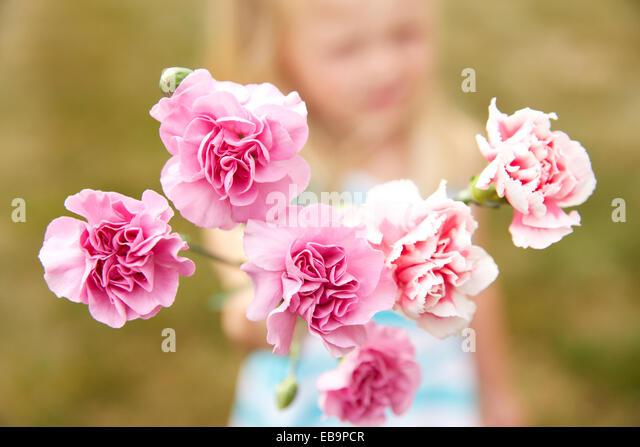 Rosa Nelken-Blumen Stockbild