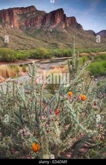Salt River, Tonto National Forest östlich von Phoenix, Arizona. Stockbild