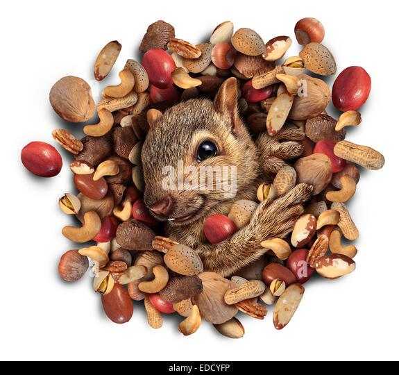 Eichhörnchen-Mutter platzen Konzept als ein niedlich pelzigen Nager entstehen aus einem Haufen von Nüssen Stockbild