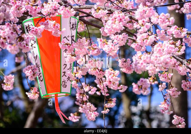 Tokyo, Japan-Frühling im Ueno Park. Stockbild