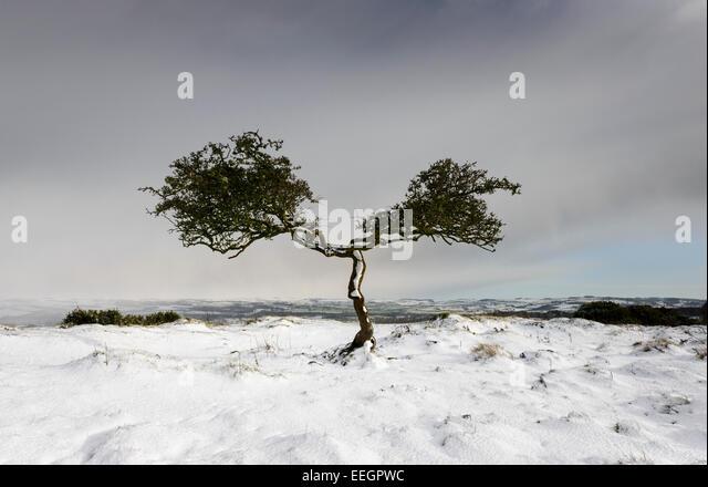 Verdrehte Baum Stockbild