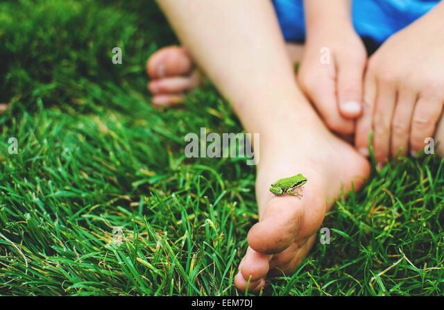Kleiner Frosch auf Kinderfuß (4-5) Stockbild