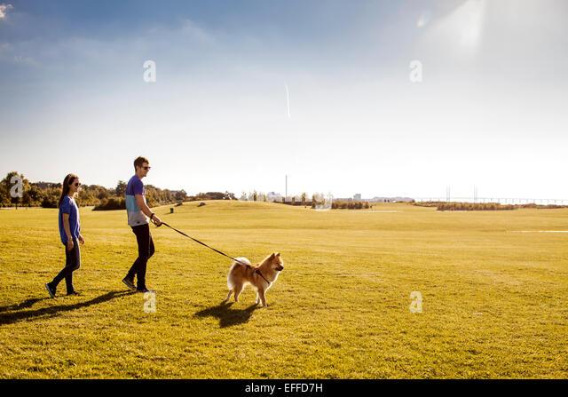 Voller Länge des Paares mit Hund spazieren im Park am sonnigen Tag Stockbild