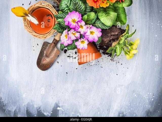 Frühling Blumen Blumenerde mit Gartengeräten, Töpfe und Boden, auf grauem Holztisch, Ansicht von Stockbild