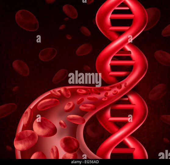 DNA-Blutkörperchen Konzept als menschliche Viens und Arterien als Doppelhelix Symbol für genetische Information Stockbild