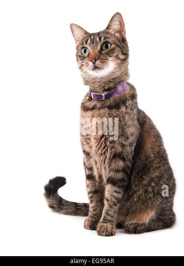 Braun Tabby Katze auf der Suche auf der linken Seite des Betrachters mit einem neugierigen Ausdruck auf weißem Stockbild