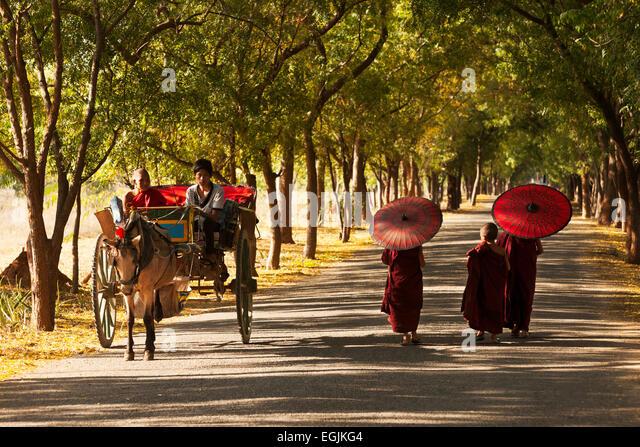 Junge buddhistische Mönche und einem Ochsen Wagen Omn eine Straße in Bagan, Myanmar (Burma), Asien Stockbild