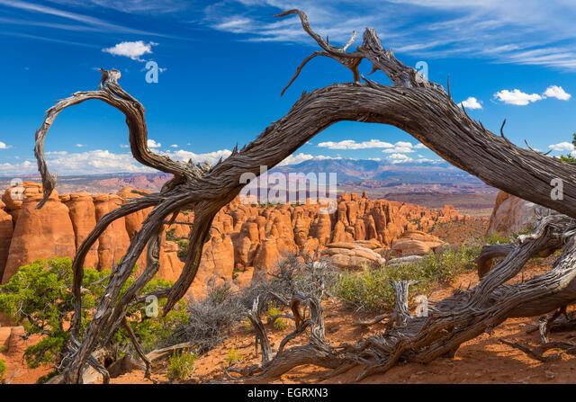 Der Feuerofen ist eine Sammlung von schmalen Sandstein Canyons im Arches National Park in Utah, USA. Stockbild