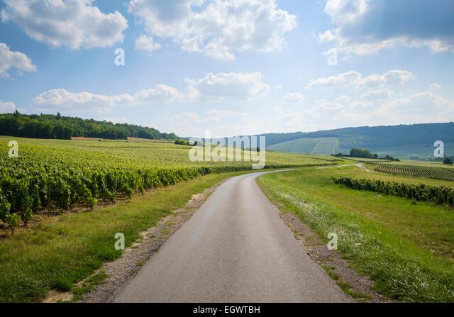 Straße auf dem Champagner-Trail zwischen Festigny und Leuvigny Dörfer in Champagne, Frankreich Stockbild