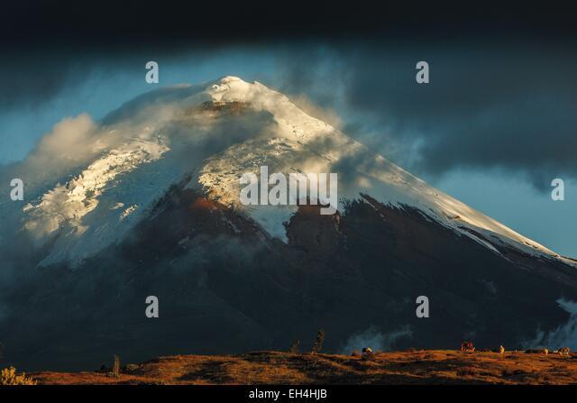 Ecuador, Cotopaxi, Cotopaxi Nationalpark, Wildpferde in den umliegenden Steppen des schneebedeckten Vulkans Cotopaxi Stockbild