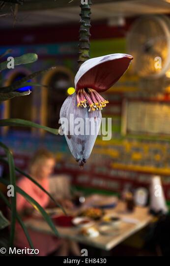 Bananenpflanze Stockbild