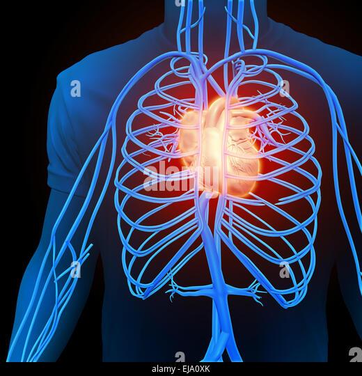 Menschlichen Kreislauf - medizinische illustration Stockbild