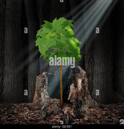 Erneuerung und Wiederherstellung Lebenskonzept als grünes Blatt Baum in Form eines menschlichen Kopfes wachsen Stockbild