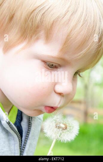 Kind bläst auf Löwenzahn Stockbild