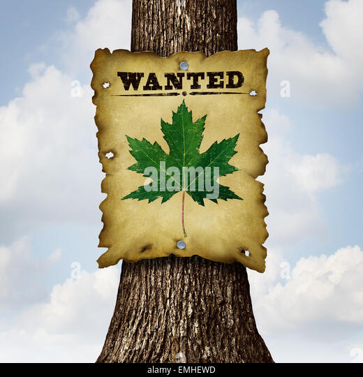 Umweltfreundliche grüne Konzept wie ein Baumstamm und ein gesuchten Zeichen mit einem Blatt als Symbol für Stockbild