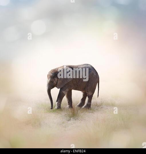 Porträt von afrikanische Elefantenbaby Stockbild