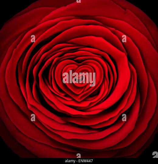 Liebe rose Konzept als Gestaltungselement rote Blume geformt als ein Kreis mit einer Herzform innen als Symbol und Stockbild