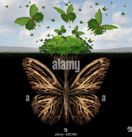 Starkes Fundament Konzept wie die Wurzeln einer Pflanze, geformt wie ein Schmetterling und die Blätter von Stockbild