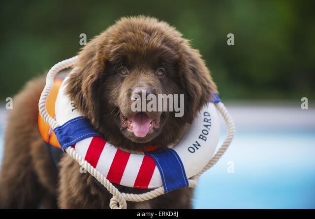 Northampton Dog Training Club