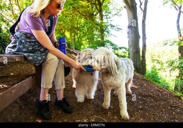 2 zwei Hunde Trinkwasser aus der Schüssel von Besitzer niedliche durstig Dehydrierung Getränk am Spaziergang Stockbild