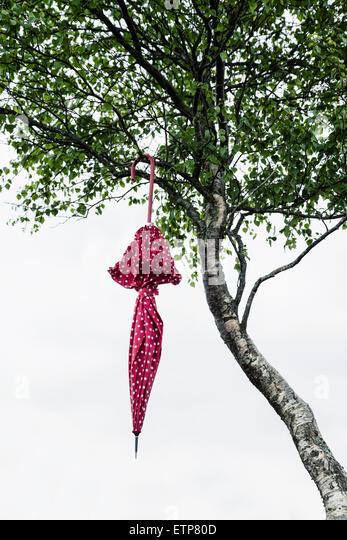 ein roter Regenschirm mit weißen Tupfen ist von einem Baum hängen. Stockbild