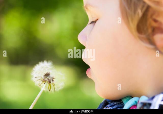 Kaukasische blonde Baby Mädchen und Löwenzahn Blume in einem Park, selektiven Fokus auf Lippen Stockbild
