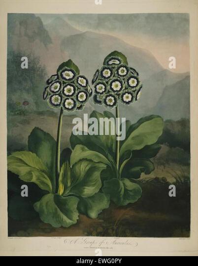 Eine Illustration von Robert Thortons Tempel von Flora Stockbild
