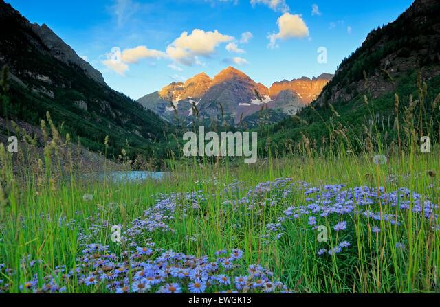 Maroon Bells und Wildblumen, White River National Forest, Aspen, Colorado USA Stockbild