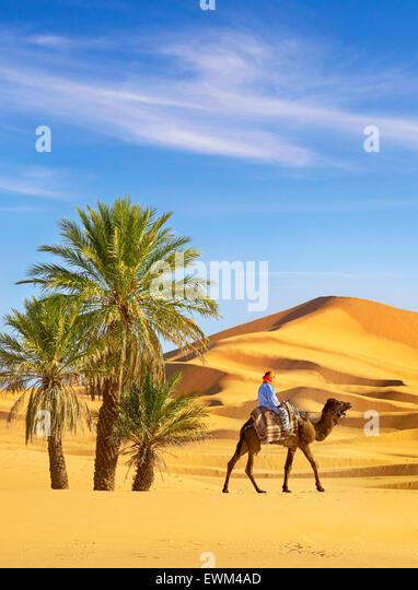Berber Mann Reiten auf dem Kamel, Erg Chebbi Wüste bei Merzouga, Sahara, Marokko Stockbild