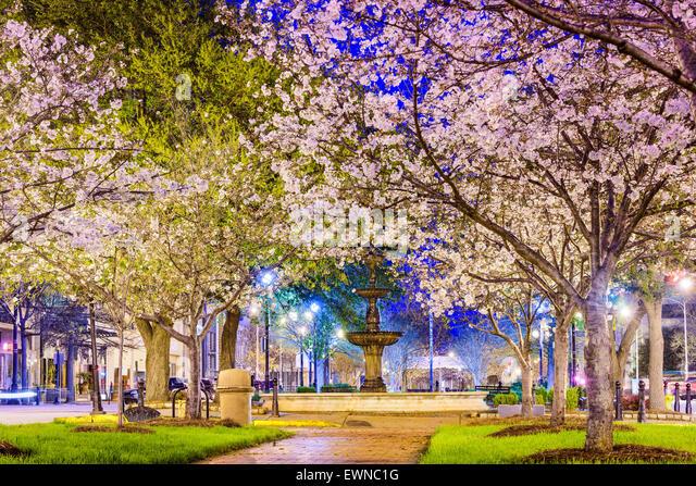Macon, Georgia, USA Innenstadt Frühling mit Kirschblüten. Stockbild