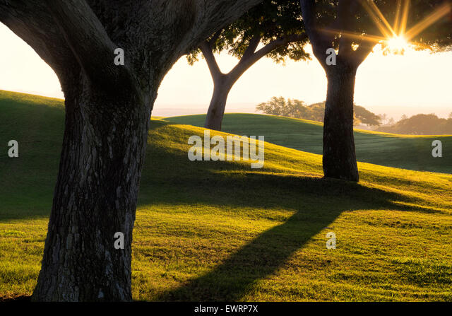 Sonnenaufgang über Bäume und Rasen im Four Seasons Hotel, Hawaii, The Big Island. Stockbild