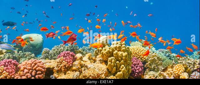 Rotes Meer, Ägypten - Unterwasser-Blick der Fische und das Korallenriff Stockbild
