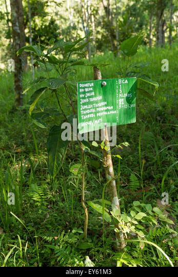 Baum mit seinem Sponsor Zeichen - Gunung Rinjani Lombok Indonesien neue Bäume Programm Stockbild