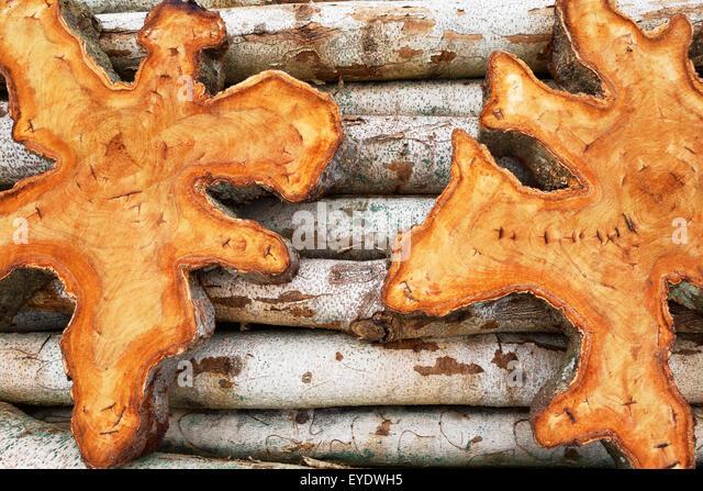 Teak Holz stumpf Abschnitte mit texturierten Oberfläche liegen auf kleinen Teak Stammholz - leer für Tabellen Stockbild