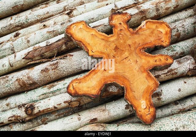 Teak Holz stumpf Abschnitt mit texturierten Oberfläche liegen auf kleinen Teak Stammholz - Rohling für Stockbild