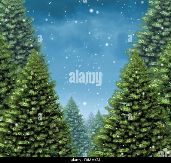 Winter Baum Hintergrund Konzept als eine Gruppe von Weihnachtsbäume mit Schneeflocken fallen vom kalten blauen Stockbild
