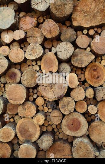 Natürlichen Hintergrund. Alten Teakholz Stümpfe mit Rissen und Jahresringe. Stockbild