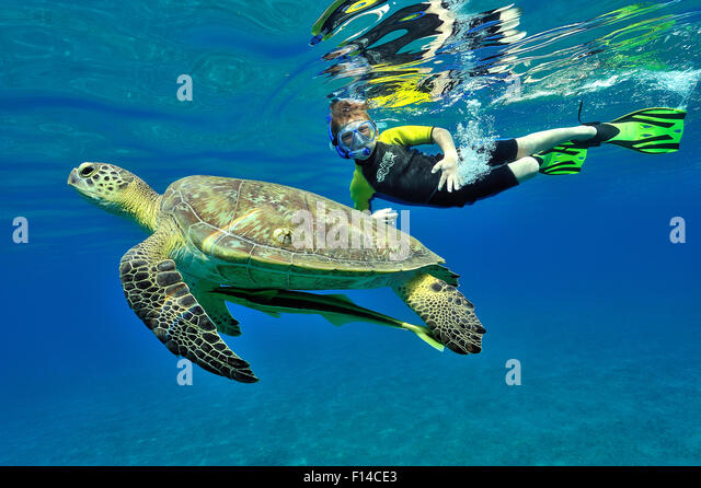 Junge Schnorcheln an der Oberfläche in der Nähe einer Suppenschildkröte (Chelonia Mydas) schwimmen Stockbild