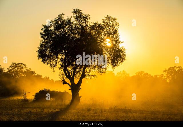 Staub im Gegenlicht bei Sonnenuntergang, South Luangwa Nationalpark, Sambia, Afrika Stockbild