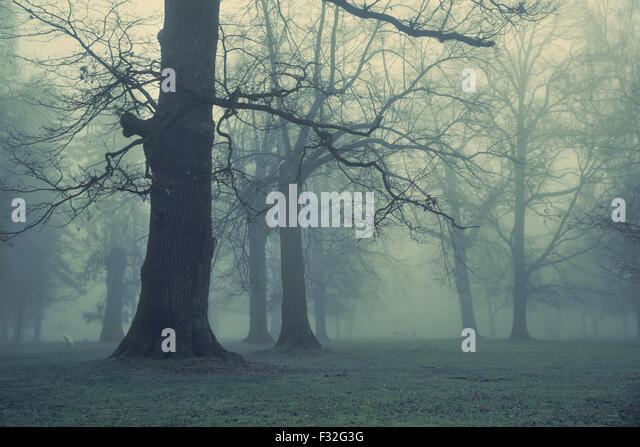 Bild von riesigen Baum im Wald Stockbild