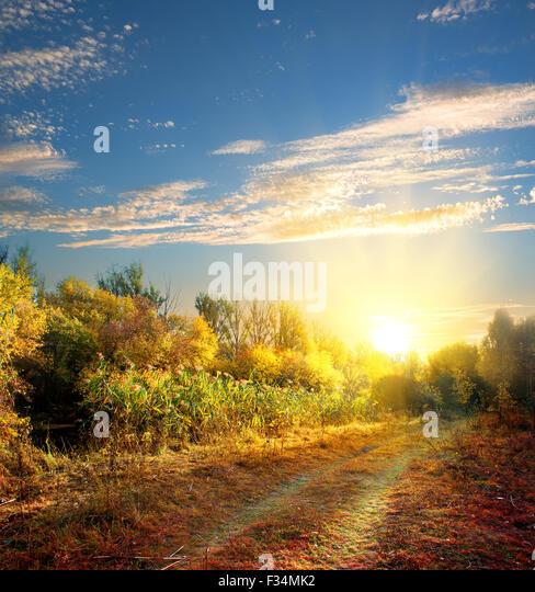 Landstraße in den bunten Herbstwald Stockbild