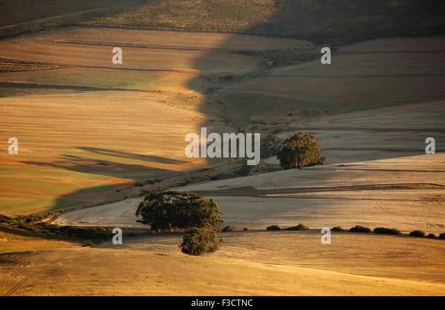 hügelige Ackerland in der Overberg Region in der Nähe von Villiersdorp, Western Cap, Südafrika Stockbild