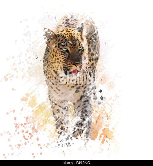 Digitale Malerei von Leopard auf weißem Hintergrund Stockbild