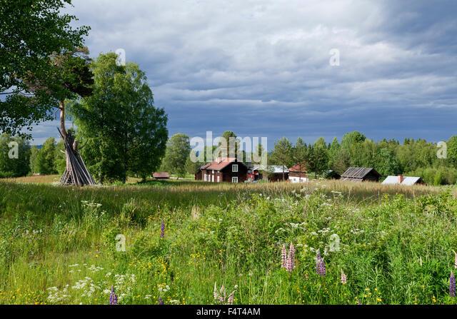 DALARNA, SCHWEDEN AM 1. JULI 2015. Ansicht der alten schwedischen Ackerland im ländlichen Raum. Blumen und Stockbild