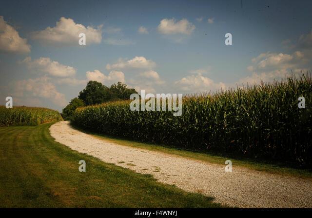 Straße führt vorbei an Mais-Feld Stockbild