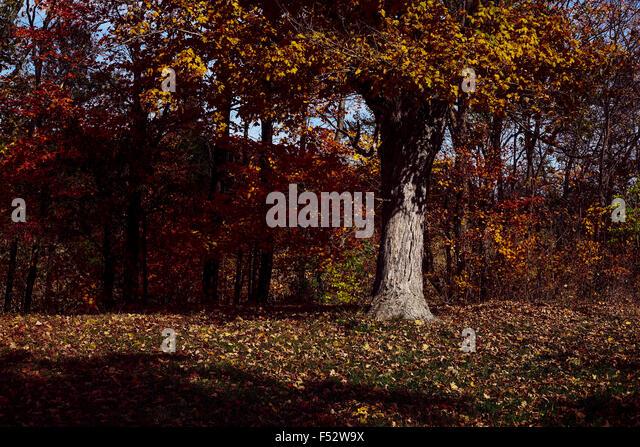 Baum drehen Herbstfarben Stockbild